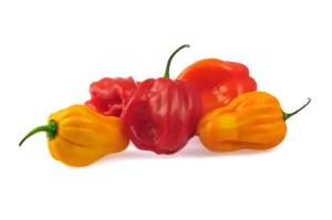 habanero chilies